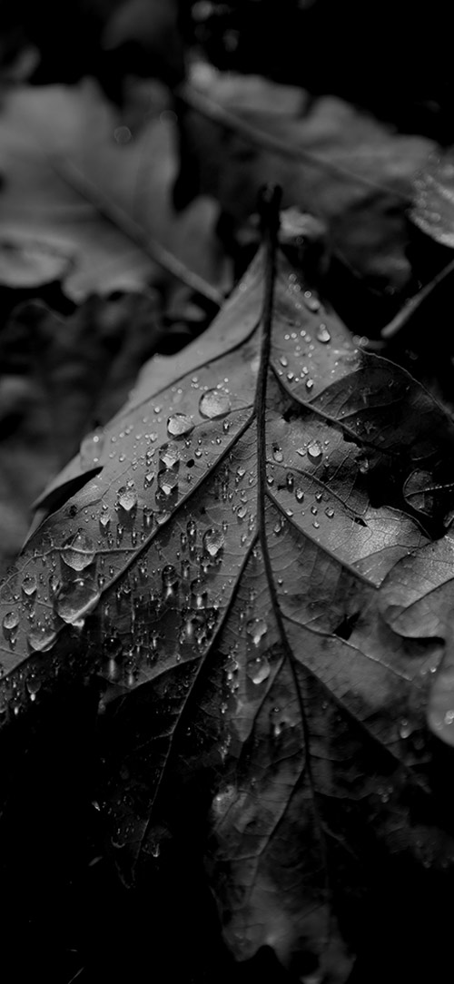 nauture natur fotografie photography